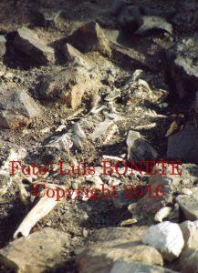 FOTO 1 Restos humanos de 3.500 años. Cerro del Cuchillo año 1996